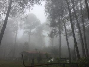 Tierra Firme, Cooperativa Sierra del Tigre